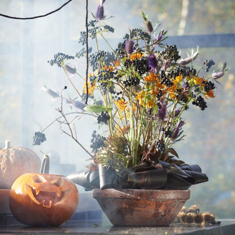 Helloween, Halloween, Pumpkin, Pompoen,